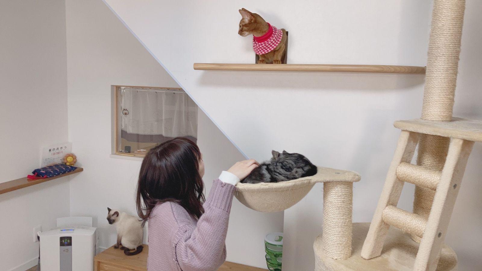 カフェ 春日井 猫